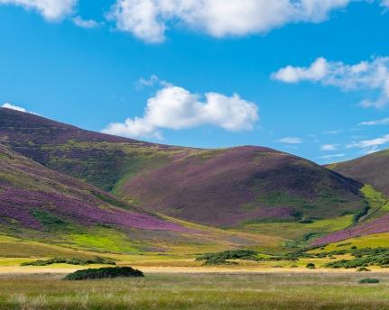 PW_Scotland_Weather_Pentland Hills Purple Heather_2 resized